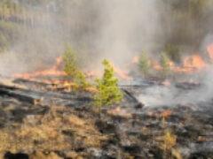 Европейские наблюдатели: сибирская тайга сегодня горит рекордными темпами