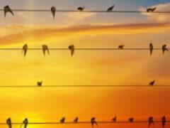 Частные дома и объекты МСП будут подключать к электросетям быстрее